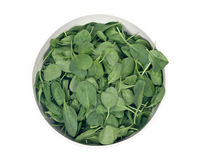 Spinach organic baby leaves. In ceramic bowl isolated on white background Stock Photo