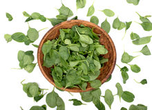 Spinach organic baby leaves. In wooden bowl isolated on white background Royalty Free Stock Photos