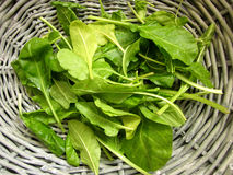 Spinach. Organic spinach in a rustic basket Stock Images