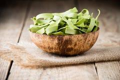 Spinach pasta Stock Photos