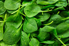 Spinach. Pile of fresh spinach leaves royalty free stock photos