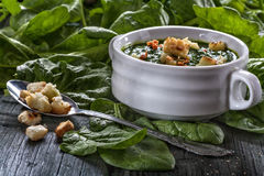 Spinach potage Stock Photography