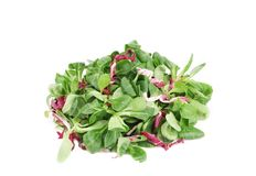 Spinach and radicchio rosso mix. Isolated on a white background Royalty Free Stock Image