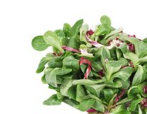 Spinach and radicchio rosso mix. Isolated on a white background Royalty Free Stock Photo
