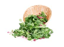 Spinach and radicchio rosso mix on wicker basket. Isolated on a white background Stock Photo