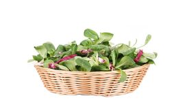 Spinach and radicchio rosso mix on wicker basket. Isolated on a white background Royalty Free Stock Image