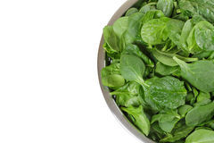 Spinach Stock Images