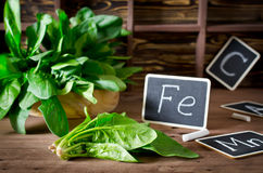 Spinach rich in vitamin C, manganese and iron Stock Images