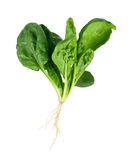 Spinach with root Stock Photo