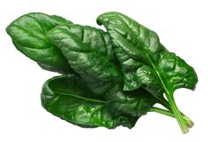 Spinach s. oleracea leaves, paths. Spinach leaves, fresh Spinacia oleracea, top view Royalty Free Stock Image