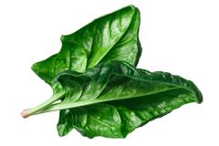 Spinach s. oleracea leaves, paths. Spinach leaves, overturned Spinacia oleracea, top view Stock Photos
