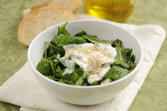 Spinach Salad. Traditional bulgarian spinach salad with cucumber, fresh onion, nuts and yoghurt Royalty Free Stock Image