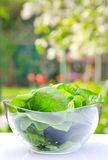 Spinach salad Stock Image