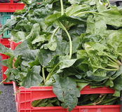 Spinach for sale. Boxes of spinach ready for sale at Avondale Market, Auckland Stock Image