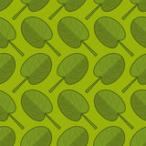 Spinach seamless pattern. Fresh green ornament. Green lettuce te Royalty Free Stock Photos