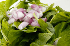 Spinach and shallots Royalty Free Stock Images