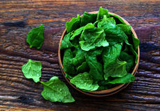 Spinach in sieve Stock Photography