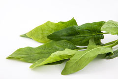 Spinach Spinacia oleracea. Isolated in white background Royalty Free Stock Photo