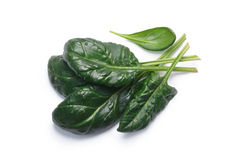 Spinach Spinacia oleracea leaves, top view, paths. Fresh spinach Spinacia oleracea leaves, top view. Clipping paths, shadow separated, natural daylight color Stock Images