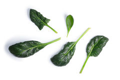 Spinach Spinacia oleracea leaves, top view, paths. Fresh spinach Spinacia oleracea single leaves, top view. Clipping paths, shadow separated, natural daylight Stock Image
