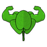 Spinach strong. Useful Herbs with big muscles. Green leaves lett Royalty Free Stock Photos