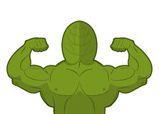 Spinach strong. Useful Herbs with big muscles.  Royalty Free Stock Photo
