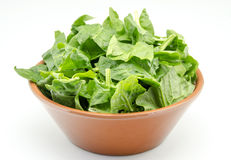 Spinach Royalty Free Stock Image
