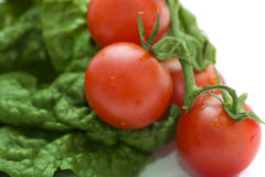 Spinach and tomatoes Royalty Free Stock Photo
