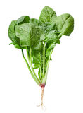 Spinach vegetable Royalty Free Stock Images