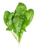 Spinach vegetable Royalty Free Stock Image