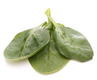 Spinach vegetables   cutout Stock Images
