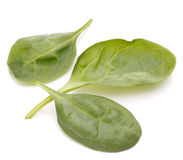 Spinach vegetables   cutout Stock Photography