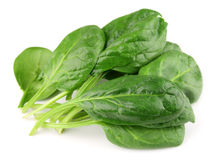 Spinach on  white Stock Image