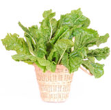 Spinach on white Royalty Free Stock Photos