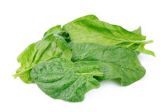 Spinach on white Stock Photography