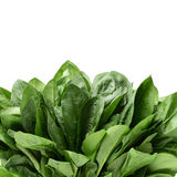 Spinach Stock Photography