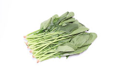 Spinach in a white background Royalty Free Stock Photo