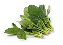Spinach on white background. Spinach on a white background royalty free stock photos