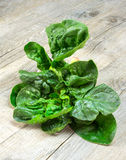 Spinach on wood Royalty Free Stock Photography