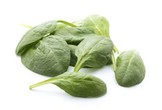 Spinach. Young fresh spinach leaves isolated on white background Royalty Free Stock Photos