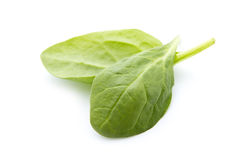Spinach. Young fresh spinach leaves isolated on white background Royalty Free Stock Image