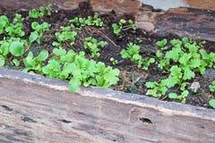 Spinachs καφετιές ξύλινες πλοκές Στοκ φωτογραφία με δικαίωμα ελεύθερης χρήσης