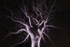 Spinachtige die de winterboom van onder het geven van het griezelig onder de aandacht wordt gebracht stock afbeeldingen