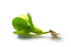 Spinaci Immagini Stock Libere da Diritti