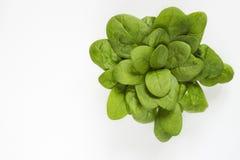 spinaci Immagine Stock