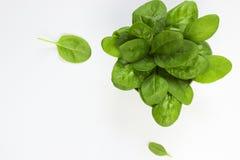 spinaci Fotografia Stock Libera da Diritti