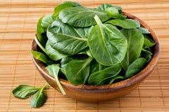 Spinaci freschi Immagini Stock