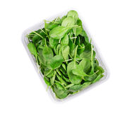 Spinaci freschi in scatola di plastica Immagini Stock
