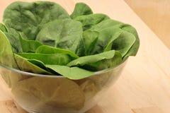 Spinaci organici freschi immagini stock