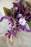 Spinaci rossi Fotografia Stock